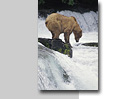 photographic tours, worksops, instruction, guided tours, alaska photography tours, alaska photo workshops, wilderness, wildlife photography, landscapes, wildflowers, bears